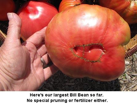 BigBillBean_0847