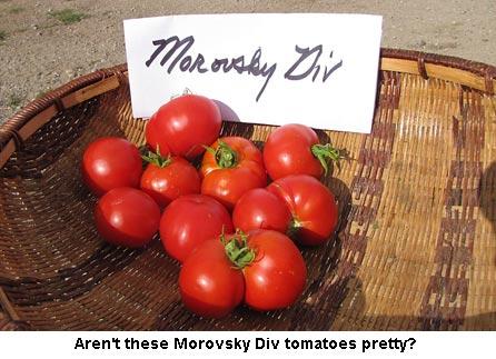 MorovskyDiv_0816