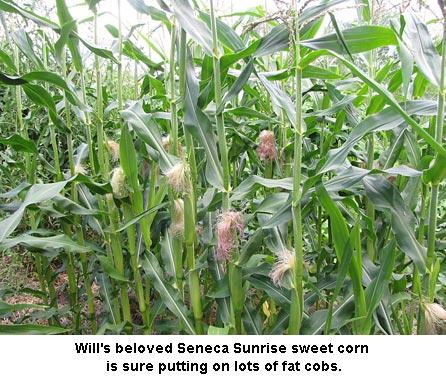 Seneca-Sunrise_0722