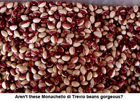 bean-seeds_1202