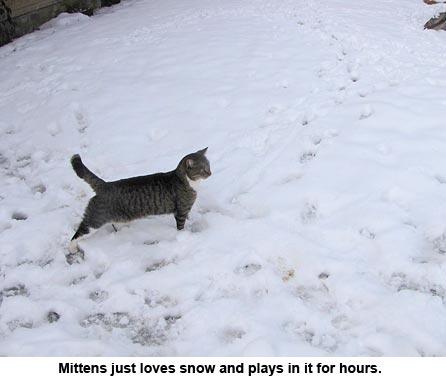 mittens_snow_9938