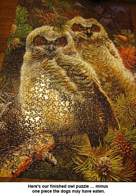owls_1320