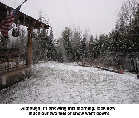 snow_9931