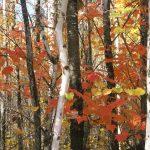 Leaves_4680