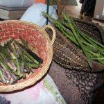 Asparagus_6882