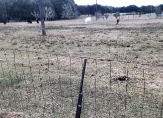 1897 Winchester shotgun leaning on a fence