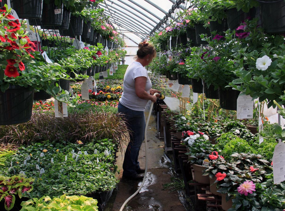 Jill Managing The Greenhouses